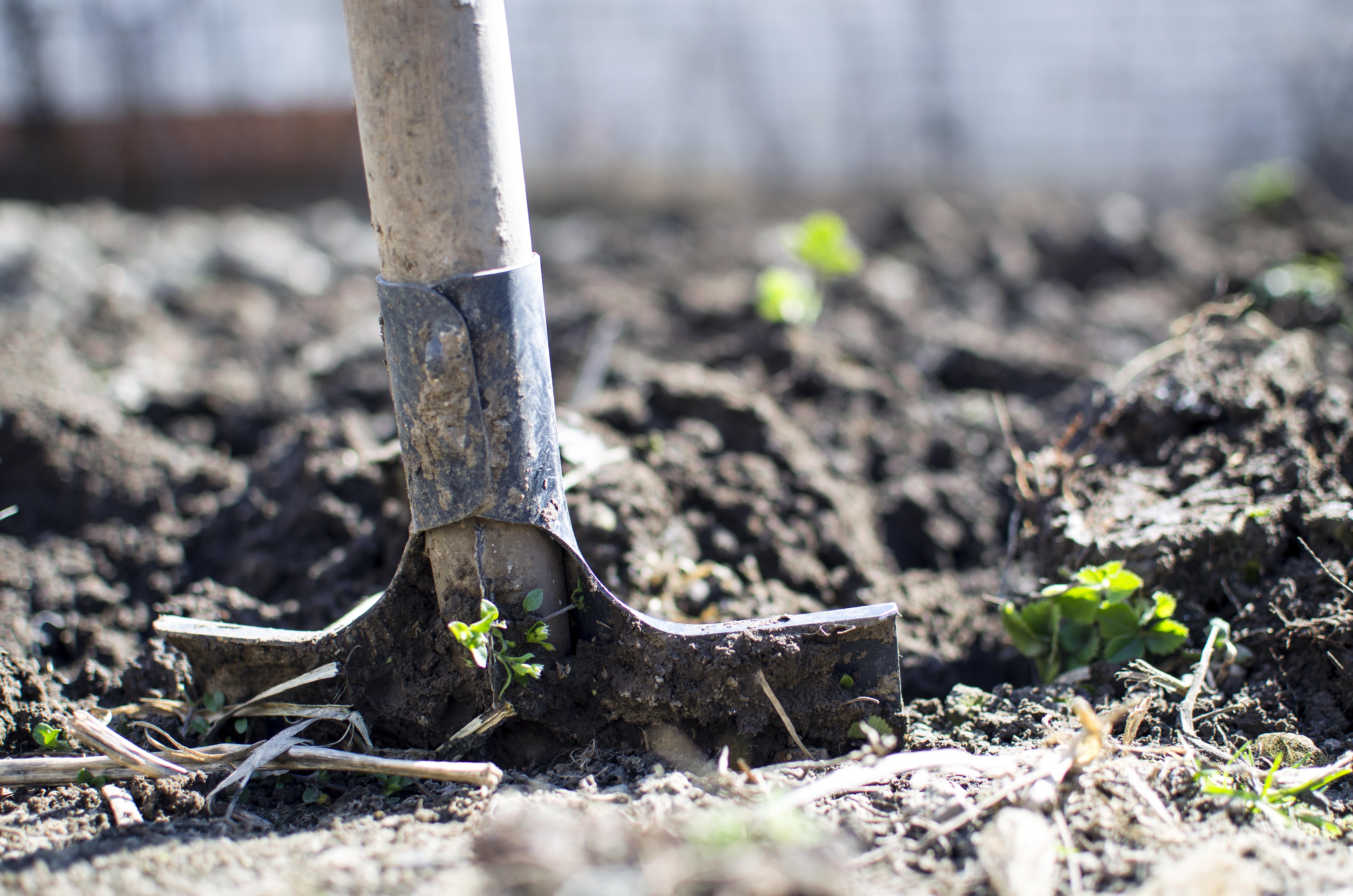 fr px garden farming